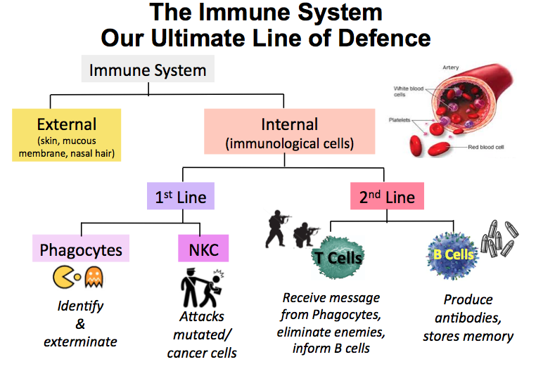 Simple Immune Response Diagram Wiring Diagram For Light Switch